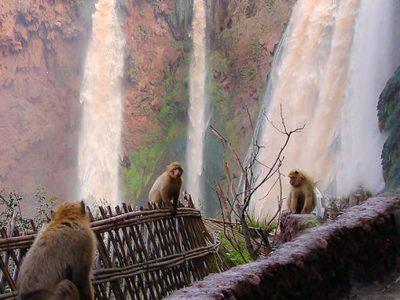 cascate ozoud marocco con scimmie