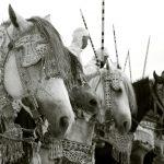cavalli per la tbourida a Marrakech